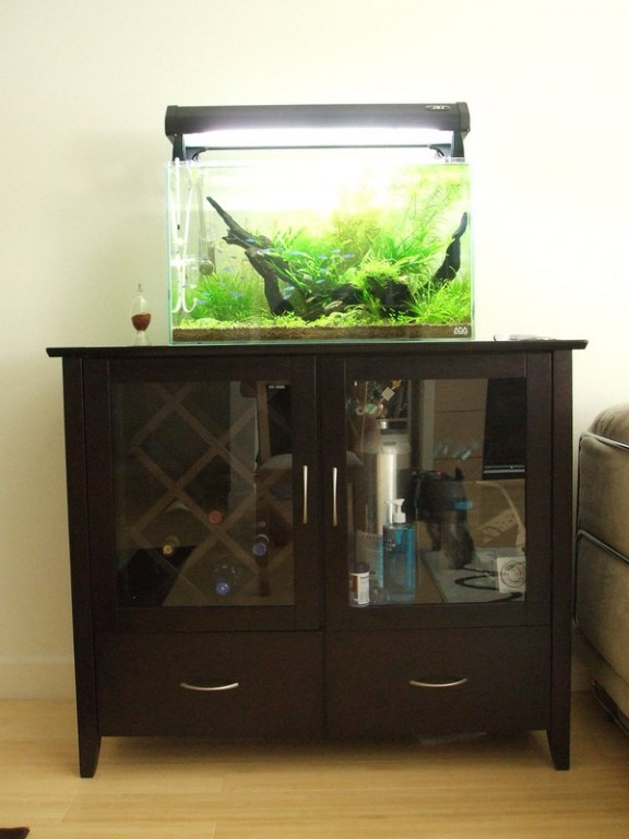 Nature aquarium importology llc for Ada fish tank